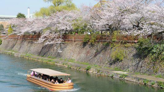 京都 疏水
